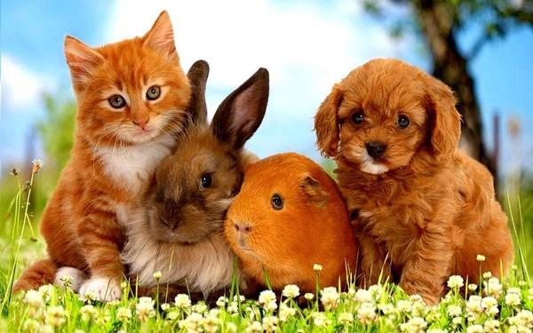 Populaire chien et chat LF22